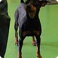 Adopt A Pet :: Quin - McDonough, GA
