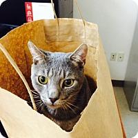 Adopt A Pet :: Happy - Trevose, PA