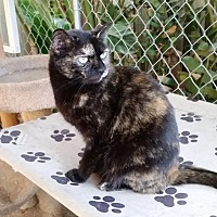 Adopt A Pet :: Polo - Tampa, FL