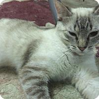 Adopt A Pet :: Clare - Pasadena, CA