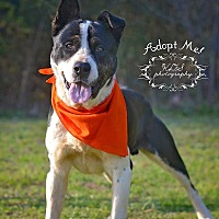 Adopt A Pet :: Scooter - Fort Valley, GA