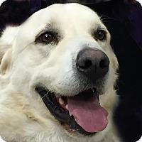 Adopt A Pet :: Angus (Gus) - Pacific, MO
