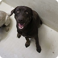 Adopt A Pet :: Shelly - Winsted, CT