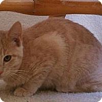 Adopt A Pet :: Diego II - Austin, TX