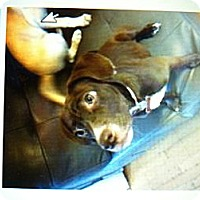 Adopt A Pet :: Ivy - New Washington, IN