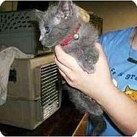 Adopt A Pet :: Cole - New Ringgold, PA