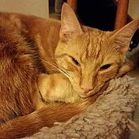 Adopt A Pet :: Paprika - Apex, NC