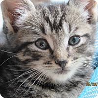 Adopt A Pet :: Lilly - Southington, CT
