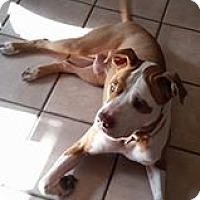 Adopt A Pet :: Roscoe - Tucson, AZ