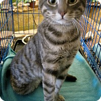Adopt A Pet :: Rocky - Alhambra, CA