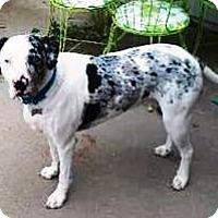 Adopt A Pet :: Otis - Gilbert, AZ