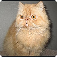 Adopt A Pet :: Sunny Deelight - Gilbert, AZ