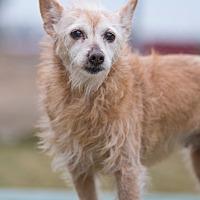 Adopt A Pet :: HoChi - Mechanicsburg, OH