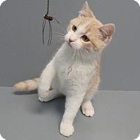 Adopt A Pet :: Tot - Seguin, TX