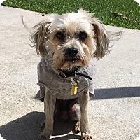 Adopt A Pet :: Benji - Homestead, FL