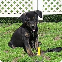 Adopt A Pet :: EMMY - Bedminster, NJ