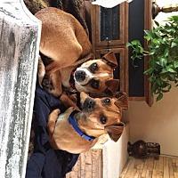 Adopt A Pet :: pixie - Mission Viejo, CA