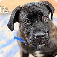 Adopt A Pet :: Nylia - Reisterstown, MD