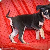 Adopt A Pet :: Love Child - Broomfield, CO