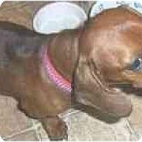 Adopt A Pet :: Jerry - Lawndale, NC