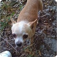 Adopt A Pet :: Cookie - Orlando, FL