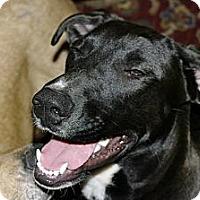 Adopt A Pet :: Clark - Franklin, TN