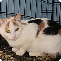 Adopt A Pet :: Candie - Lindenhurst, NY