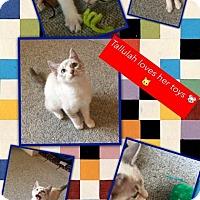 Adopt A Pet :: Talullah - McDonough, GA