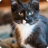Adopt A Pet :: Trouser - Faribault, MN