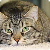 Adopt A Pet :: Jerry - Harrison, NY