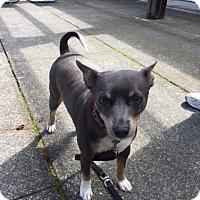 Adopt A Pet :: Titus - St Helena, CA