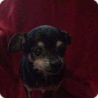 Adopt A Pet :: Basil: Adoption Pending - Astoria, NY