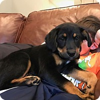 Adopt A Pet :: Deborah - Sagaponack, NY