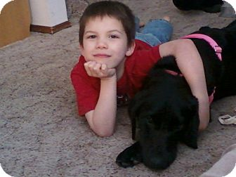 Labrador Retriever Mix Dog for adoption in Bellingham, Washington - Frida