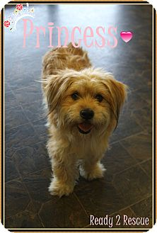 Tibetan Terrier/Terrier (Unknown Type, Small) Mix Dog for adoption in Rockwall, Texas - Princess