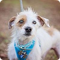 Adopt A Pet :: Toby - Sherman Oaks, CA