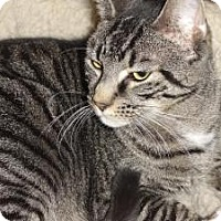 Adopt A Pet :: Chunky Monkey - Barnegat, NJ
