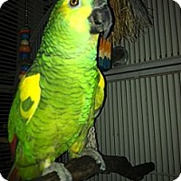 Adopt A Pet :: Bruce - Fountain Valley, CA