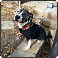 Adopt A Pet :: Dude - Elmhurst, IL