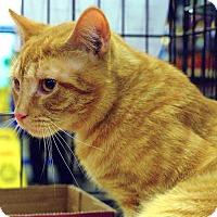 Adopt A Pet :: Maxx - Pittstown, NJ