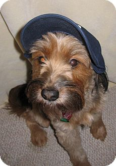 Terrier (Unknown Type, Medium) Mix Dog for adoption in West Allis, Wisconsin - Foster Homes?