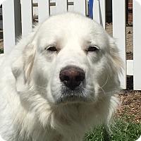 Adopt A Pet :: Anna ADOPTED - Bloomington, IL