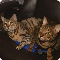Adopt A Pet :: Odette - Medina, OH