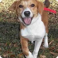 Adopt A Pet :: Axel - Memphis, TN