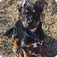 Adopt A Pet :: Flash - Marietta, GA