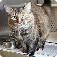 Adopt A Pet :: Loras-Super Sweet - Arlington, VA