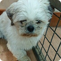 Adopt A Pet :: Marley - Northumberland, ON