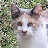 Adopt A Pet :: Gabriella - Gonzales, TX