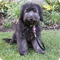 Adopt A Pet :: JONAS - Newport Beach, CA