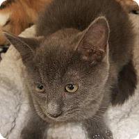Adopt A Pet :: CHERISH - Houston, TX